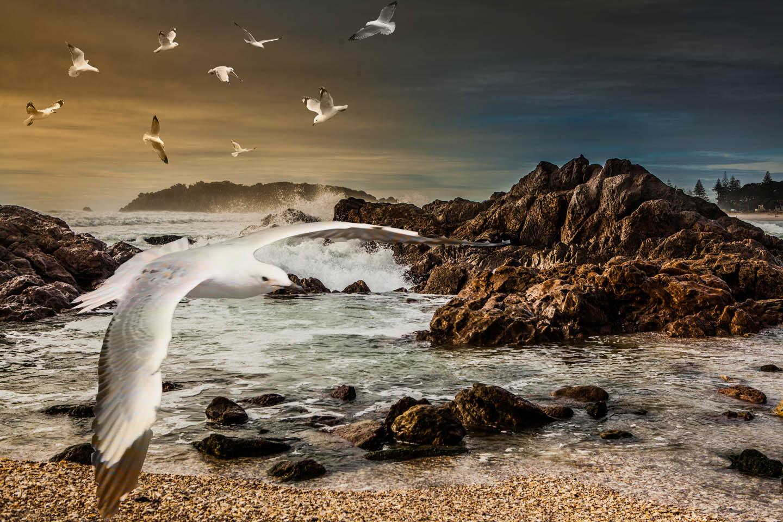 seagulls at Mount Maunganui
