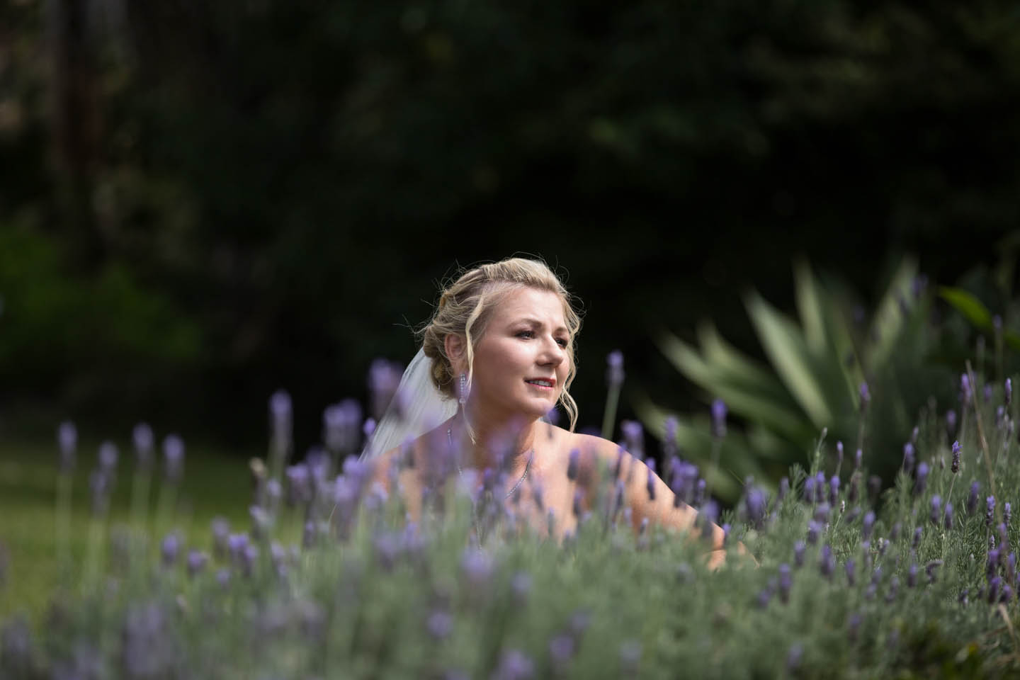 bride with purple flowers in the foreground